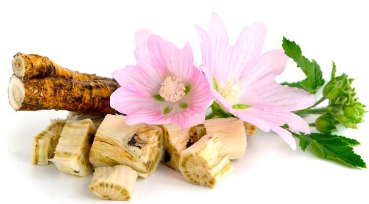 цветки и корни алтея