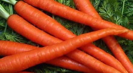 Морковь культурная
