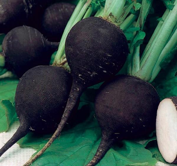 овощ черная редька