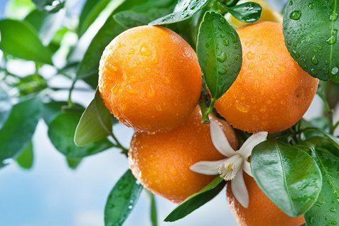 полезный фрукт апельсин