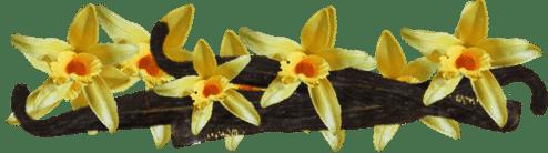 цветки ванили