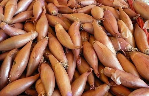 луковицы лука шалот