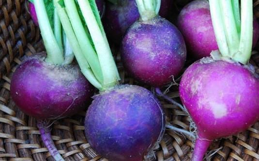 фиолетовая редиска