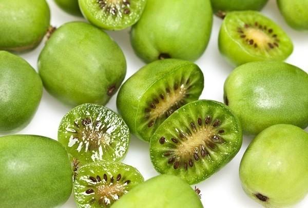 ягоды актинидии