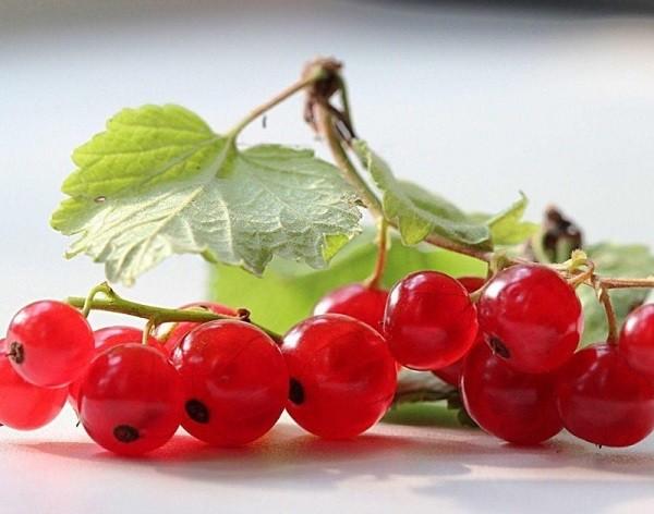 плоды красной смородины