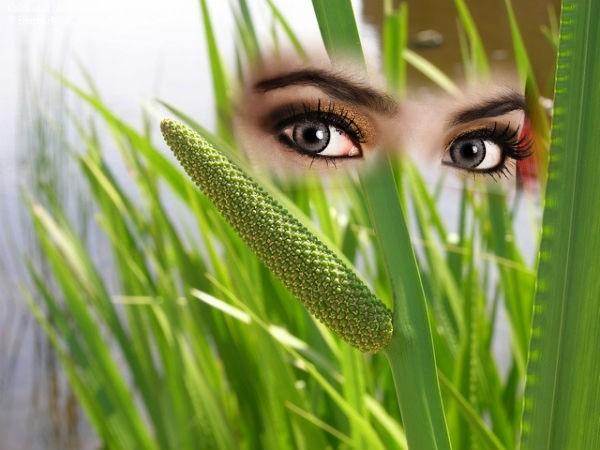 аир для улучшения зрения