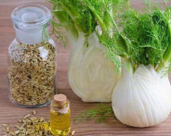 масло из семян фенхеля