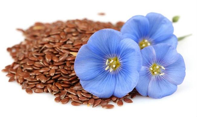 семена льна для иммунитета