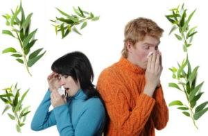 польза эвкалипта при простуде