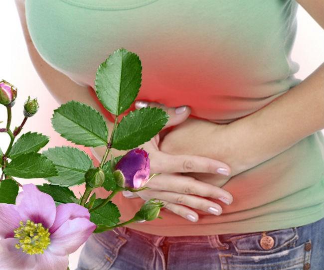 полезные свойства шиповника для желудка