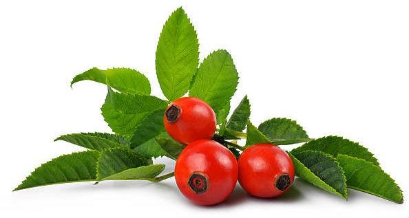 плоды шиповника от простуды