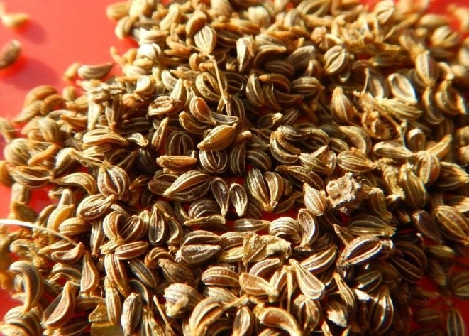 пророщенные семена петрушки