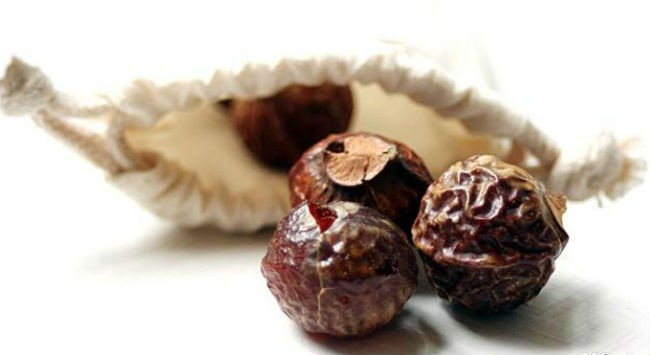 плоды дерева мыльный орех