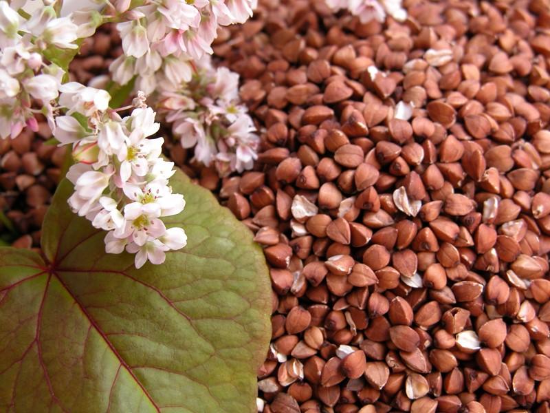 цветы и крупа гречки