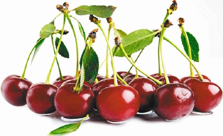 гроздь вишни