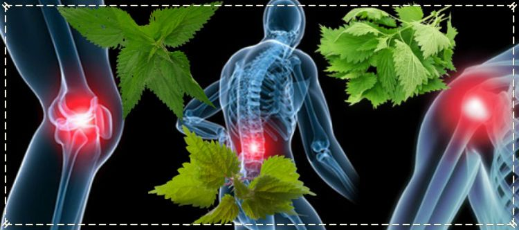 суставные болезни и крапива