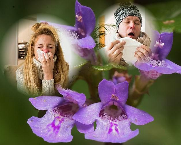 будра от гриппа и ангины