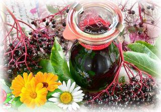ягоды и цветки бузины от простуды