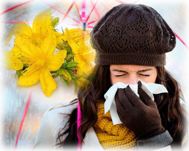 лечение зверобоем простуды