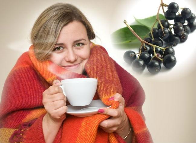 польза бузины при простуде