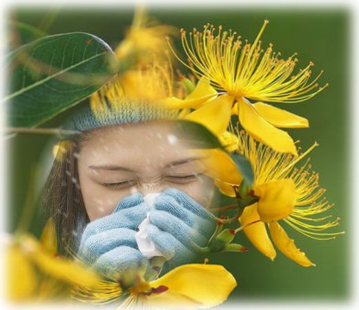 зверобой от гриппа и простуды