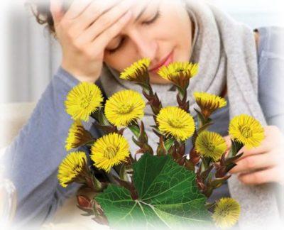 трава мать-и-мачехи от простуды