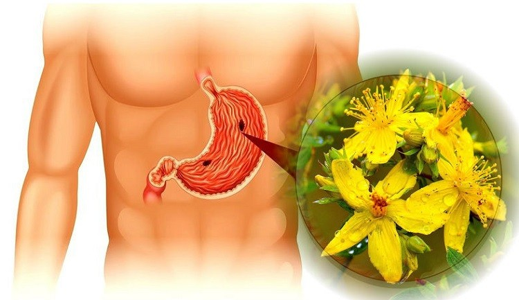 свойства зверобоя для желудка
