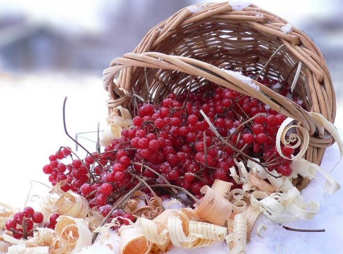 калиновые плоды от простуды
