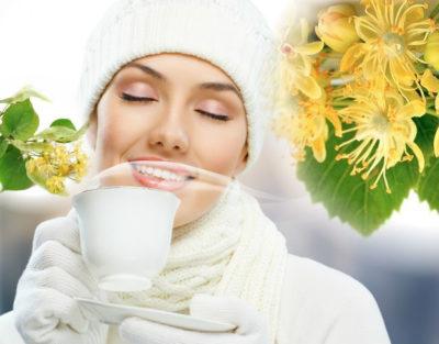 свойства липы при простуде