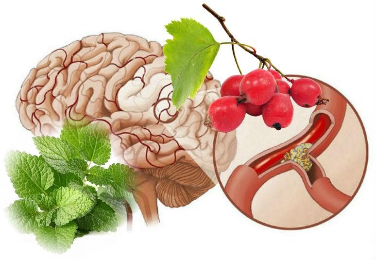 лекарственные растения для сосудов мозга