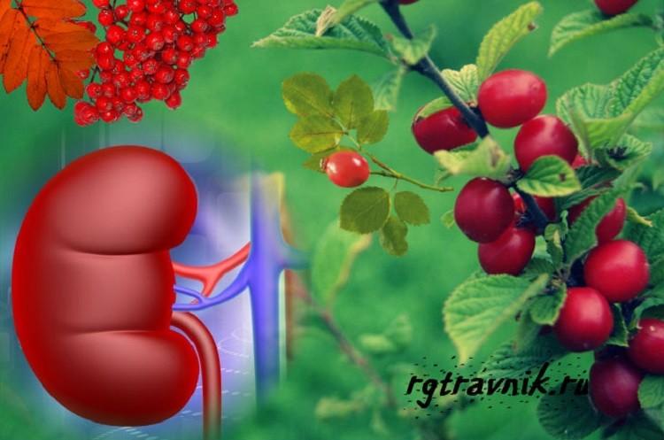 польза ягод при заболеваниях почек