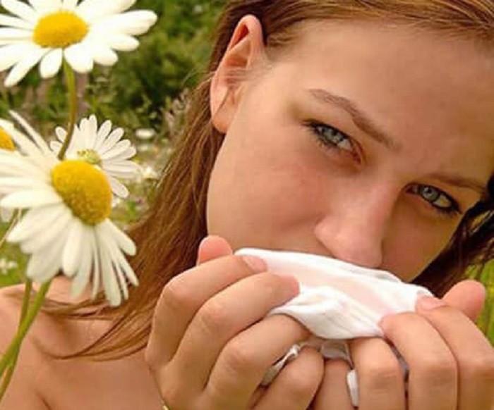 лечение аллергии ромашкой