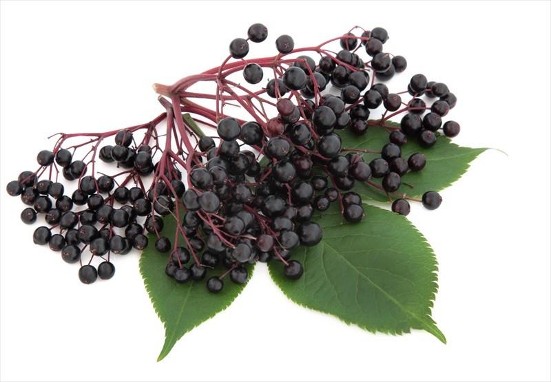 бузиновые ягоды