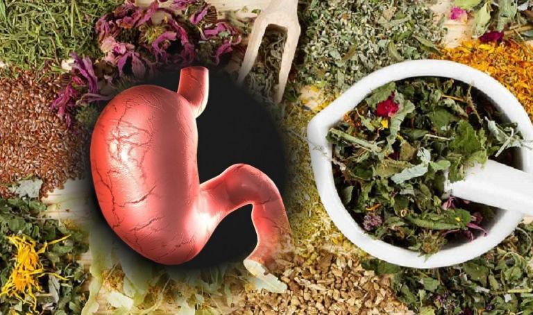 лекарственные растения для желудка