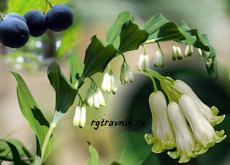 цветы и плоды купены