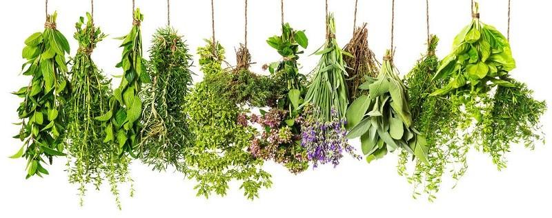 лекарственные растения от дисбактериоза