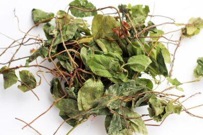 высушеная трава боровой матки