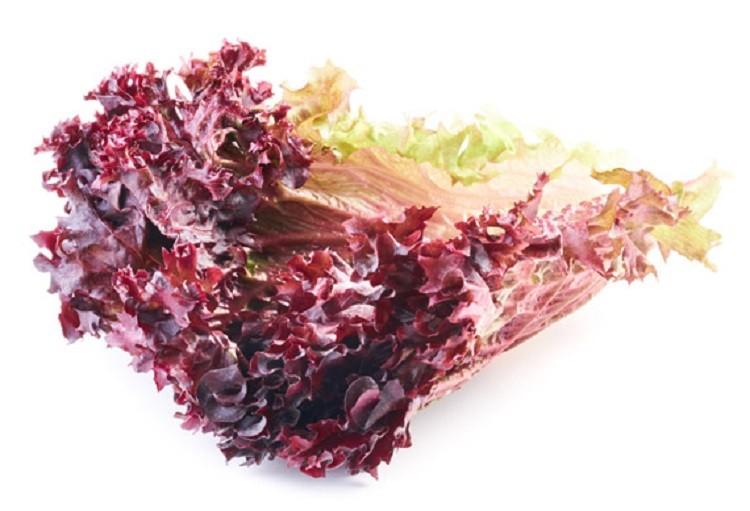 как выглядит салат лолло росса
