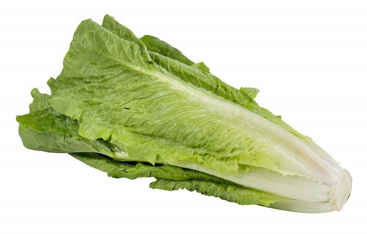 кочан салата ромэн