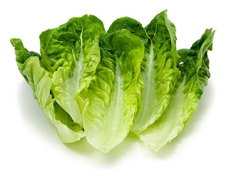 лист салата ромэн