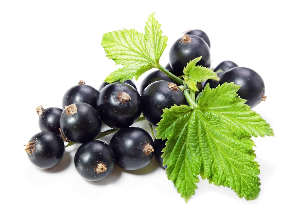 ягоды и листья черной смородины