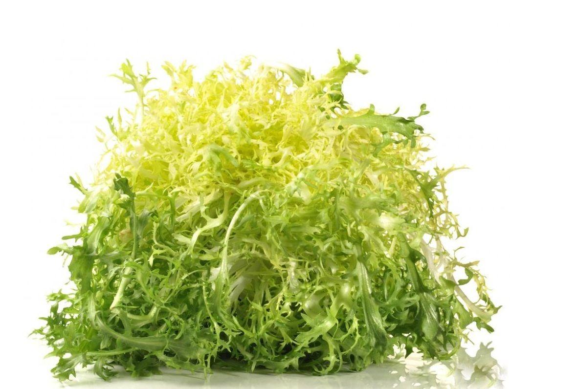 зеленый лист салата фризе