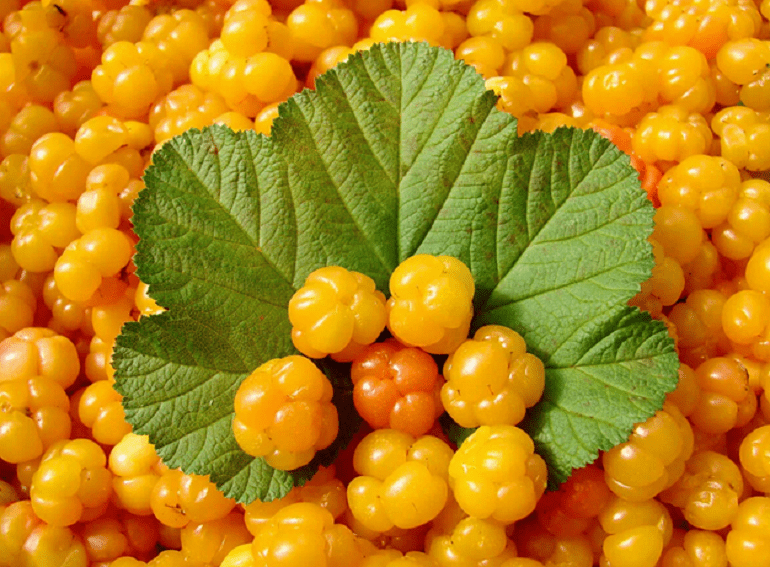 ягоды и листья морошки