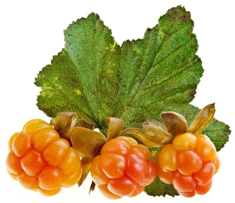 плоды морошки
