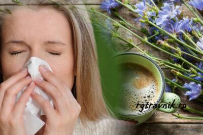 цикорий от гриппа