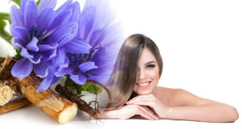 цикорий для восстановления волос