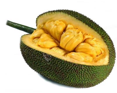 плод хлебного дерева