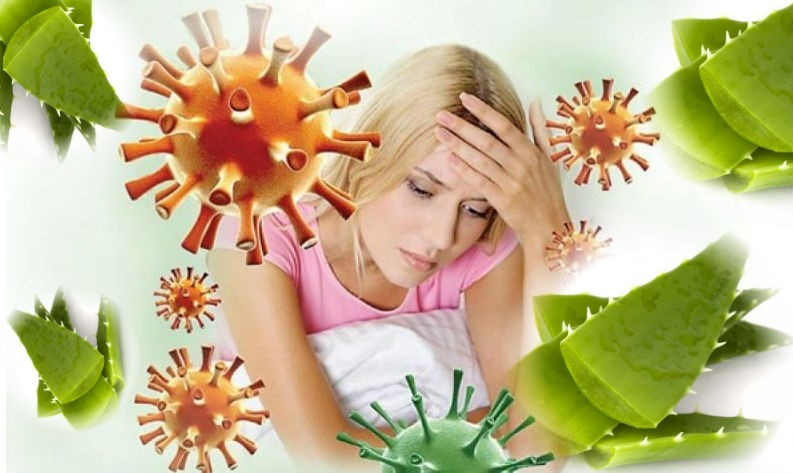 польза алоэ при низком иммунитете