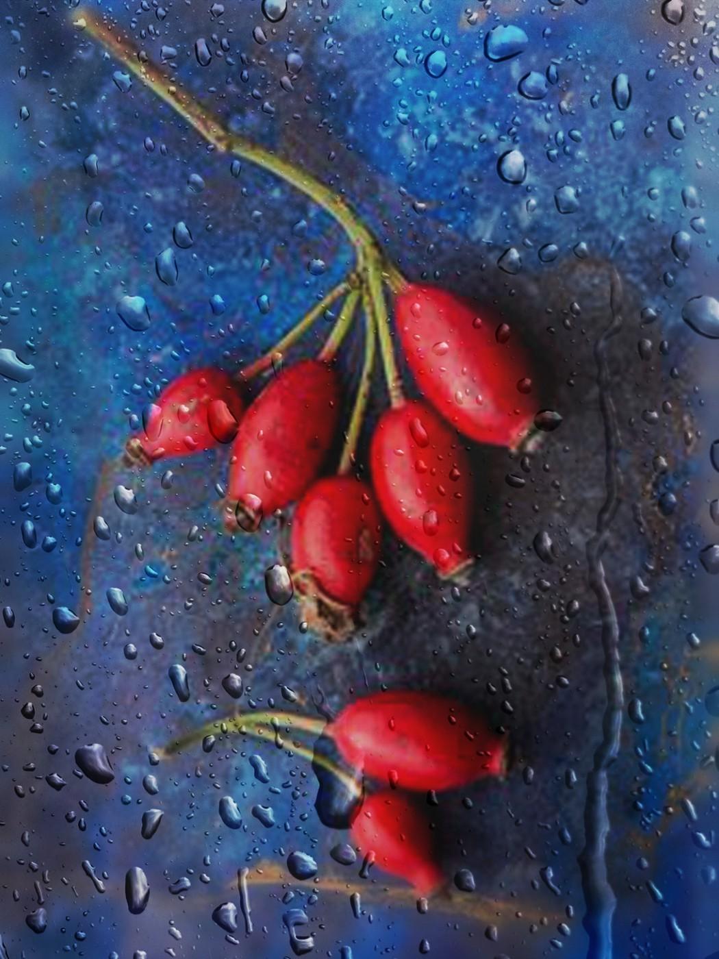 ягоды шиповника для иммунитета
